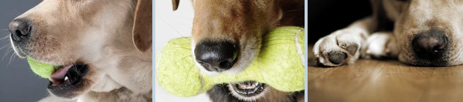 slider_image_dogdaycare