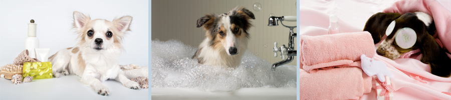 slider_image_doggrooming